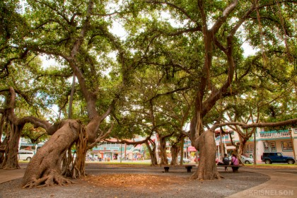 Lahaina Banyan Tree: Original